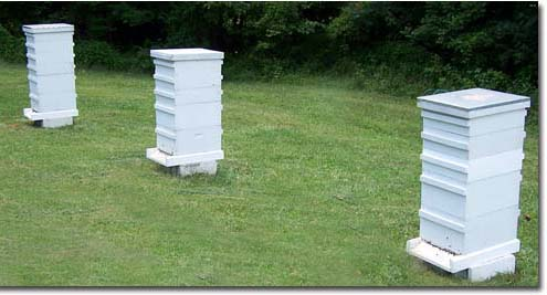 3hives